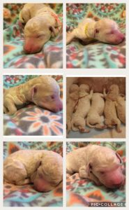 The puppies less then 24 hours old