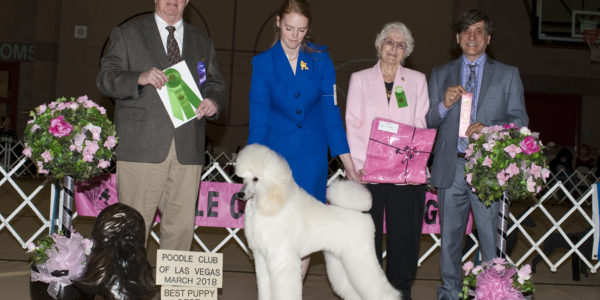 Luna wins Best Puppy and Best in Sweeps!